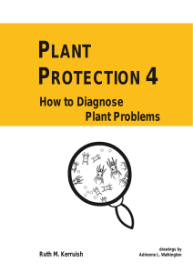 PLANT PROTECTION 4 – How to Diagnose Plant Problems