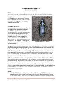 GREEN-LINED GROUND BEETLE