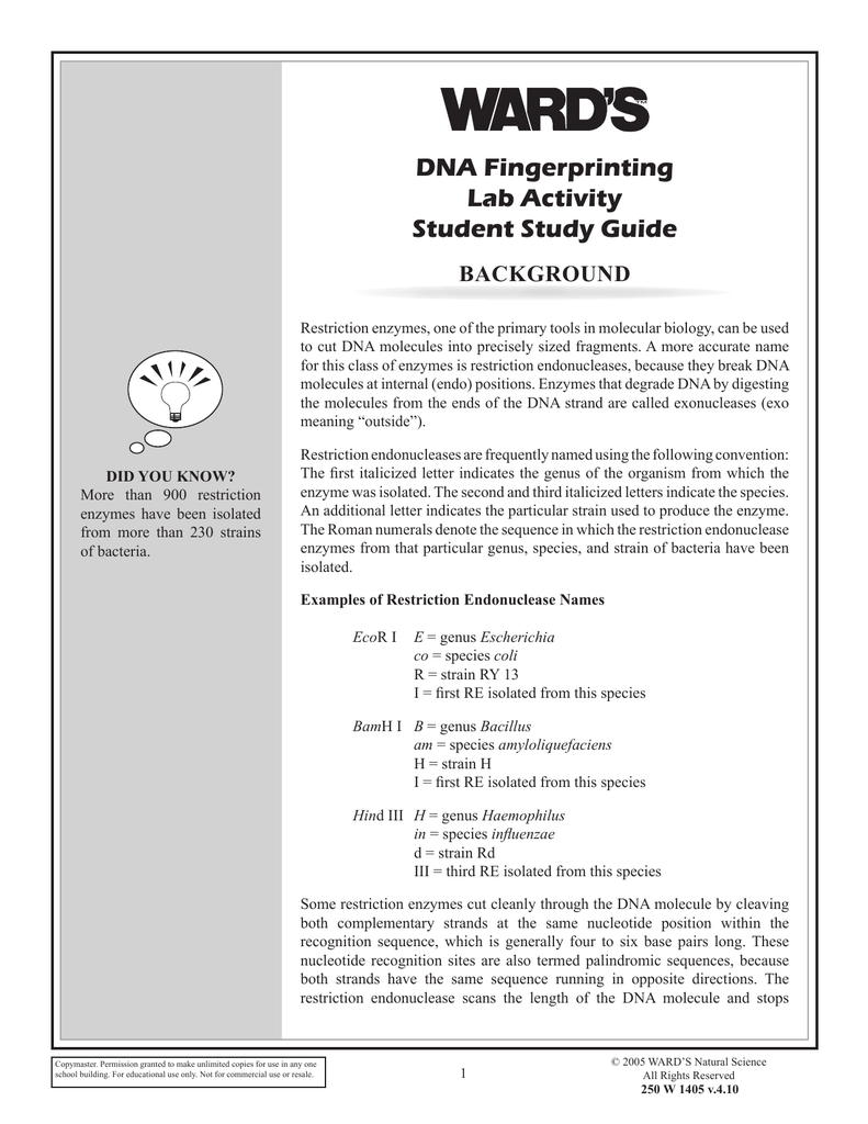 Dna Fingerprinting Lab Answers Kubreforic