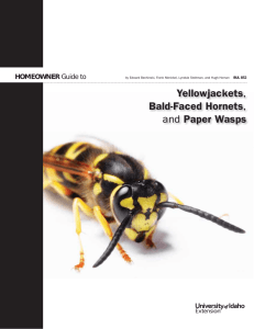 Homeowner Guide to Yellowjackets, Bald