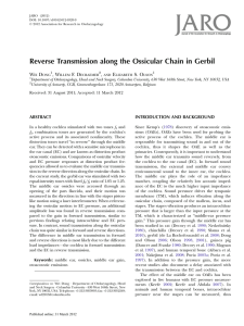 Reverse Transmission along the Ossicular Chain in Gerbil